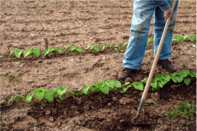 FAIR Appeals - Spain - Cultivating a Community